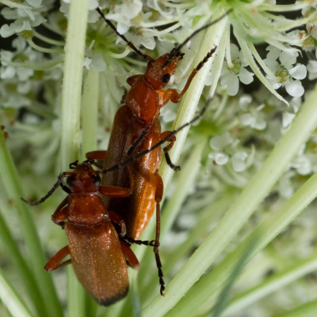 Macros/  proxi/  insectes  - Page 5 Kp_85910