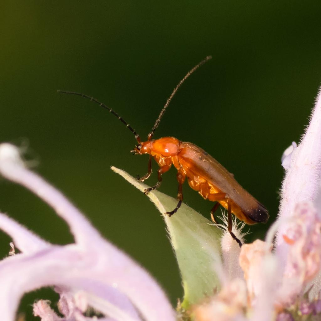 Macros/  proxi/  insectes  - Page 6 Kp_87210