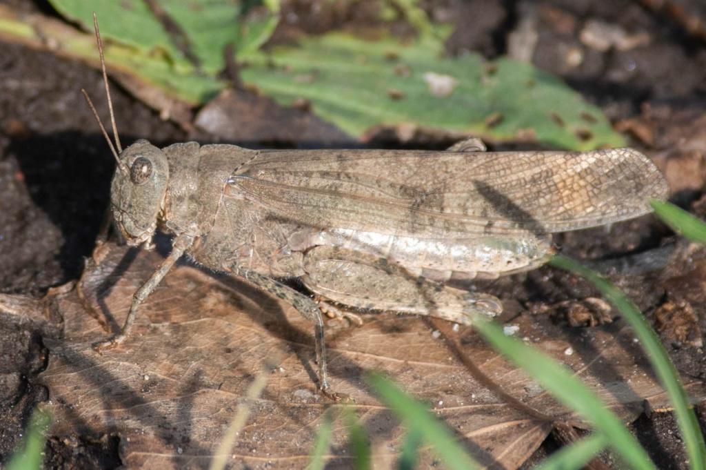 Macros/  proxi/  insectes  - Page 8 Kp_88310