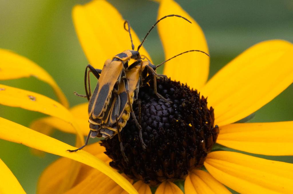 Macros/  proxi/  insectes  - Page 11 Kp_89810