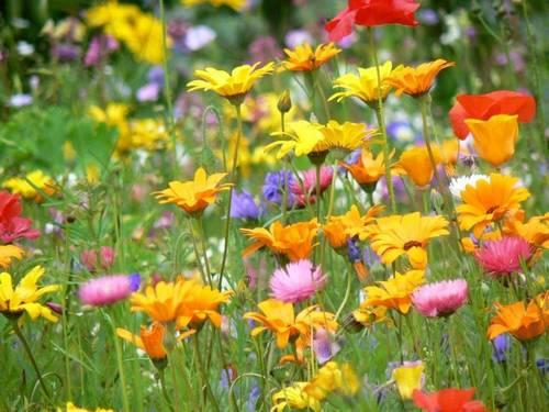 Primavera Flores10