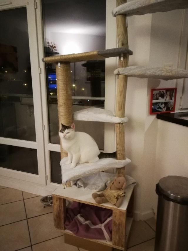 Mellie, femelle blanche grise tabby, chat européen née en juin 2016 Part_110