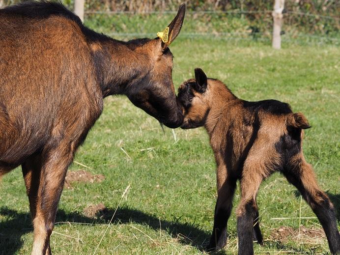 VALENTIN - Fils d'INDIENNE (réformée d'élevage) P2150511
