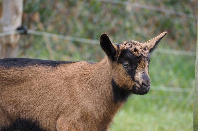 VALENTIN - Fils d'INDIENNE (réformée d'élevage) P2160610
