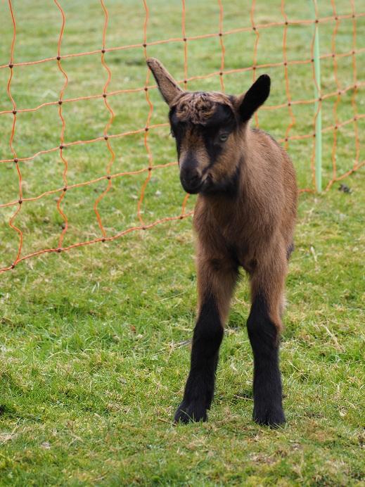 VALENTIN - Fils d'INDIENNE (réformée d'élevage) P2160611