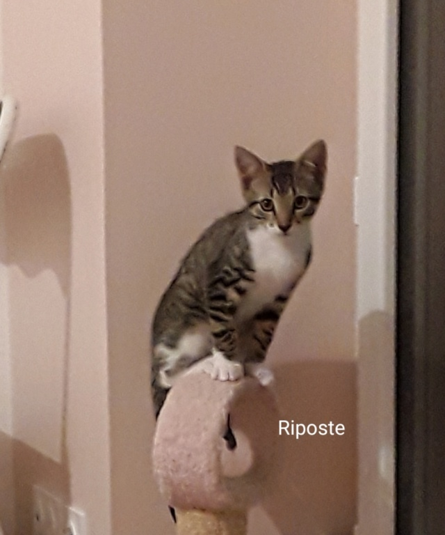 Riposte, Mâle Europeen (13/03/2020) Ripost10
