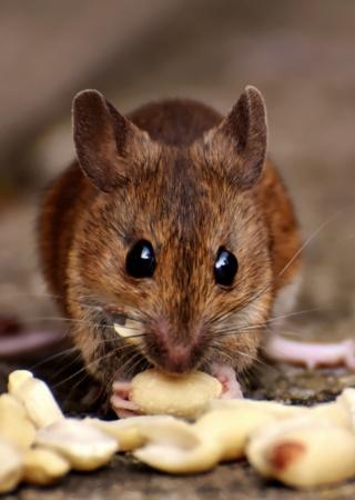 تفسير حلم الثعبان و الفأر و خروج الصديد | تفسير حلمك مع احمد رضا | تفسير الاحلام Brown-10