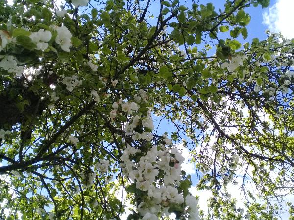 Садовые товарищи - Страница 5 A510
