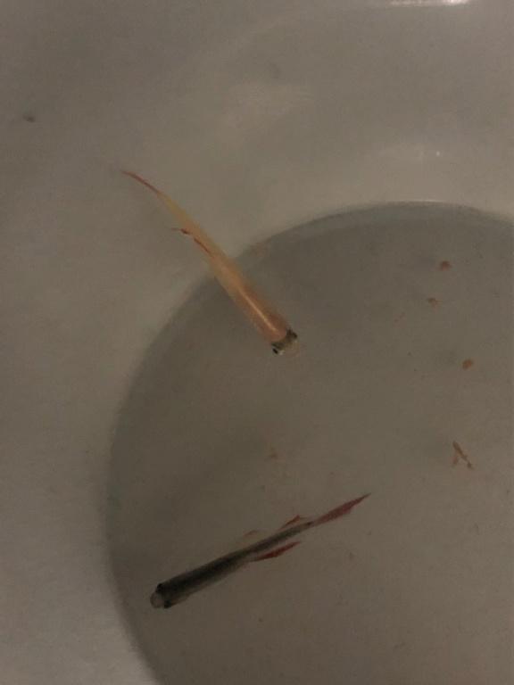Identification poissons d'eau douce Poisso10