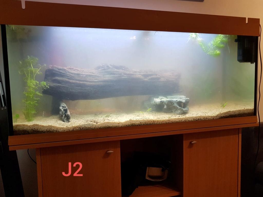 240 L avec racines du ruisseau d'à côté Aqua_j11