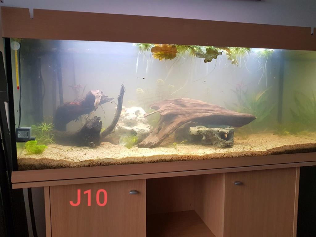 240 L avec racines du ruisseau d'à côté Aqua_j13
