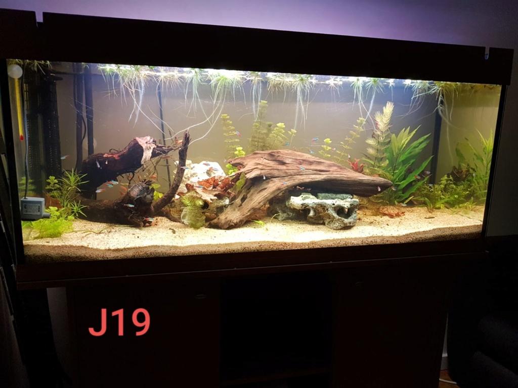 240 L avec racines du ruisseau d'à côté Aqua_j15