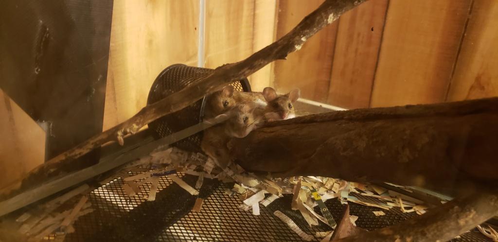 Female mice keep fighting- help! 20210711