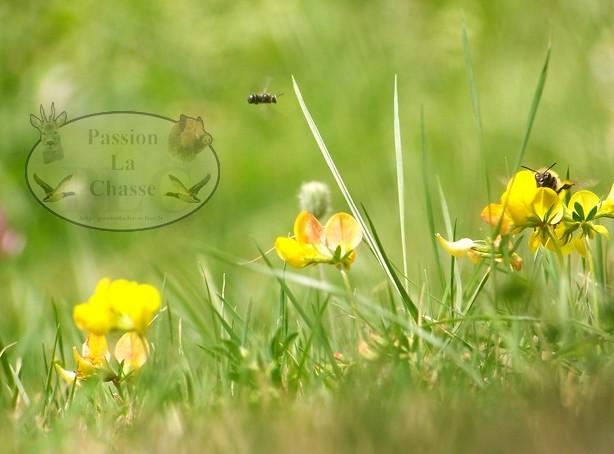 ANB : la FNC émet des critiques Insect11