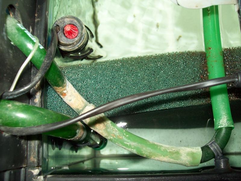 Aménager un 240 l en bac de repro Photos28