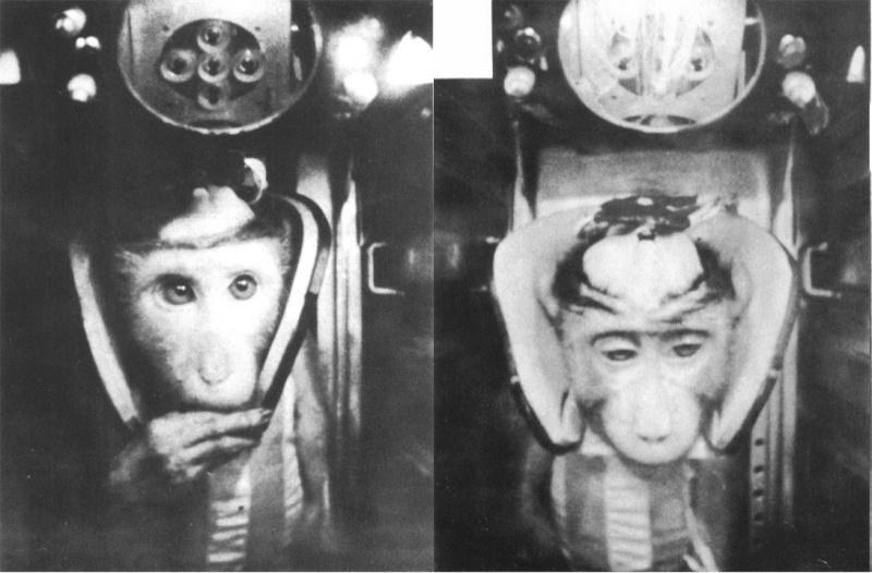 les animaux spatiaux - Page 3 Mp10