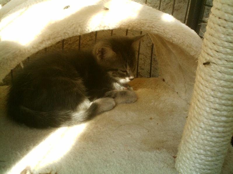 présentation de vos animaux: chats: Grisou11