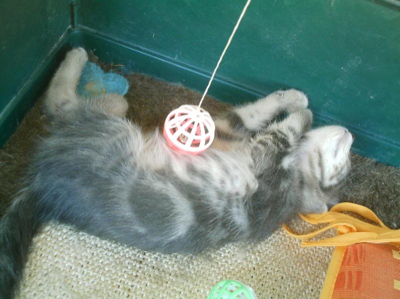 présentation de vos animaux: chats: Grisou14