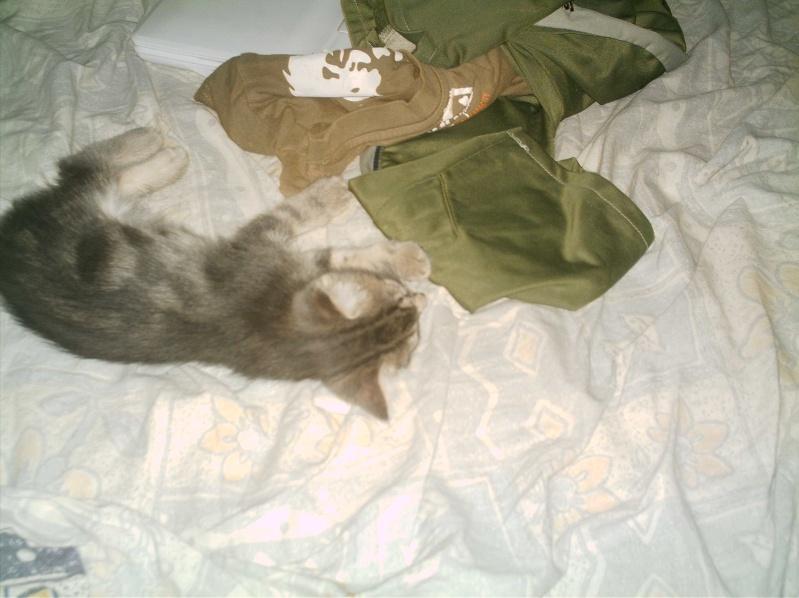 présentation de vos animaux: chats: Grisou17