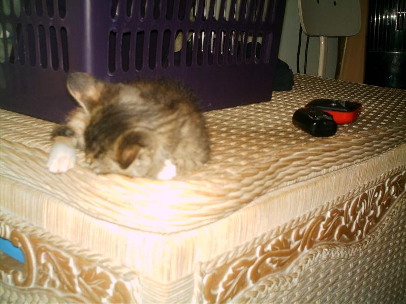 présentation de vos animaux: chats: Grisou18