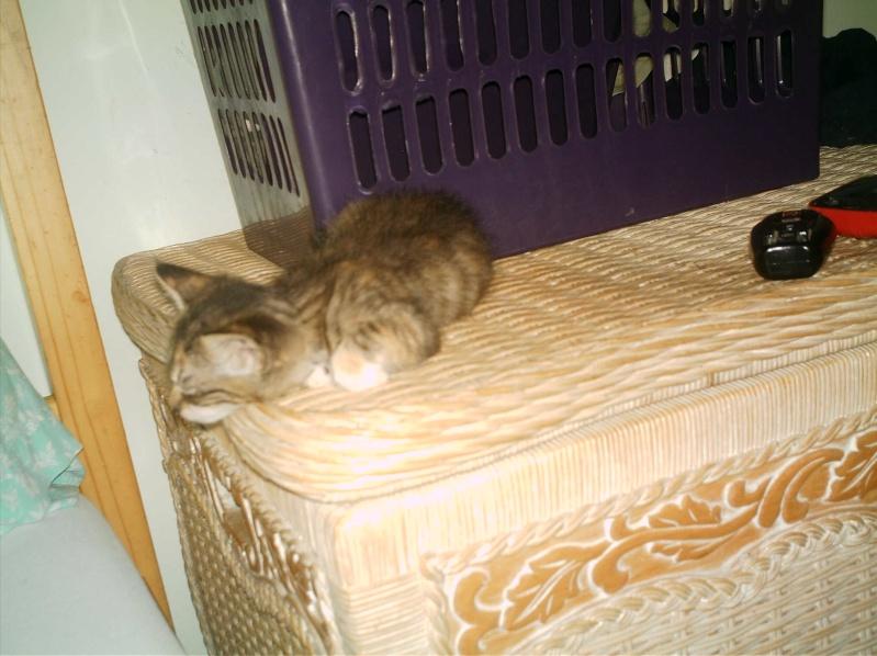 présentation de vos animaux: chats: Grisou19