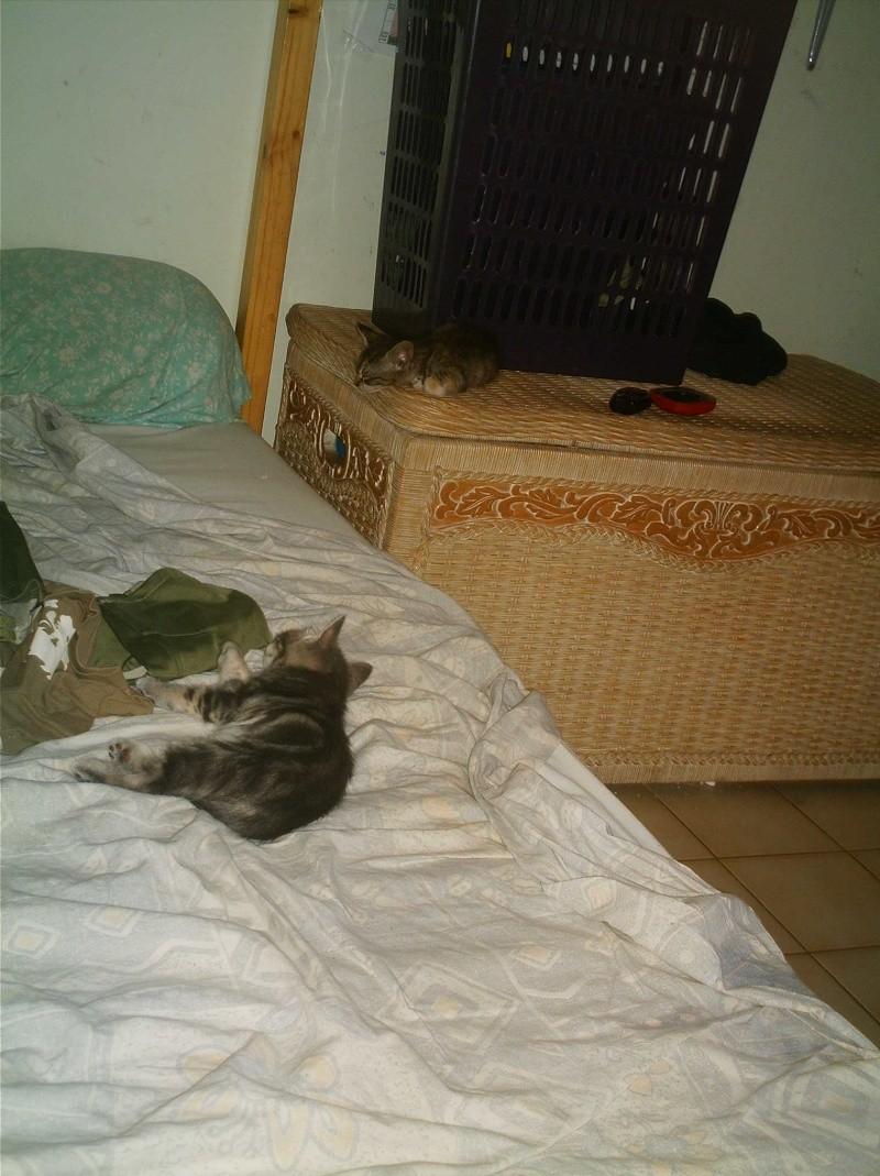 présentation de vos animaux: chats: Grisou20