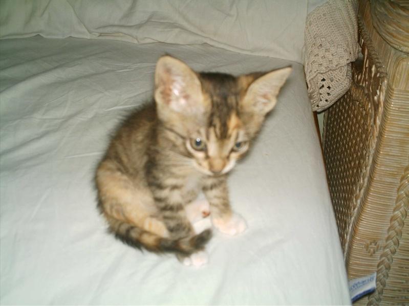 présentation de vos animaux: chats: Grisou40