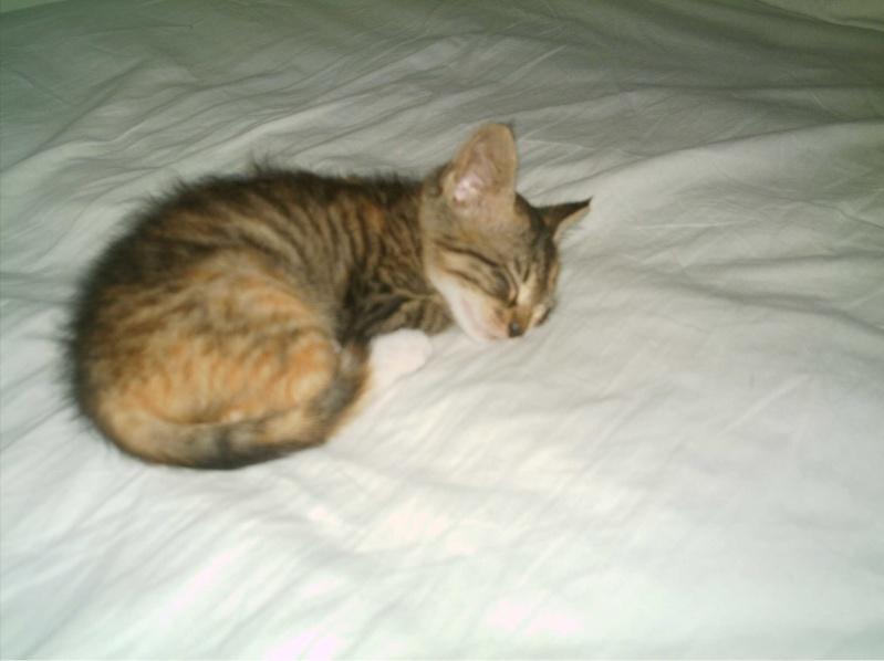 présentation de vos animaux: chats: Grisou43