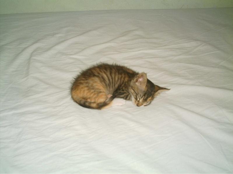 présentation de vos animaux: chats: Grisou44