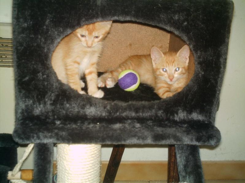 présentation de vos animaux: chats: Mes_fu23