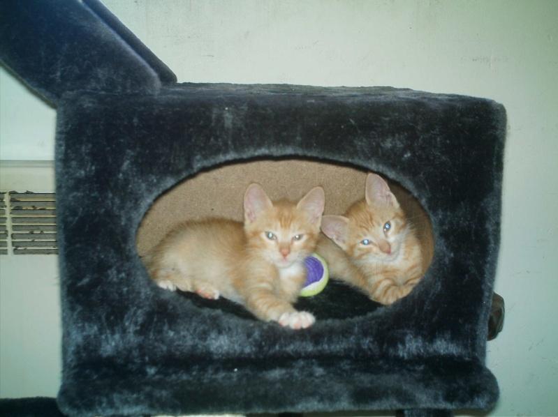 présentation de vos animaux: chats: Mes_fu24