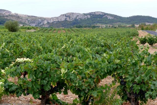 Canet-en-Roussillon. Canet_18