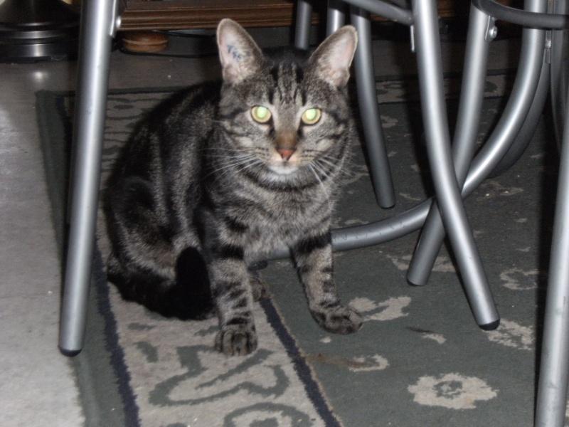 Taity, tigré de 2ans  Parc_a10