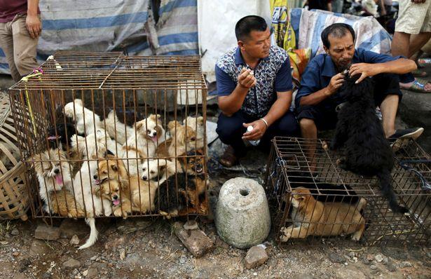 La Chine interdit (enfin) la consommation de viande de chien et chat… et d'animaux sauvages! 0_vend10