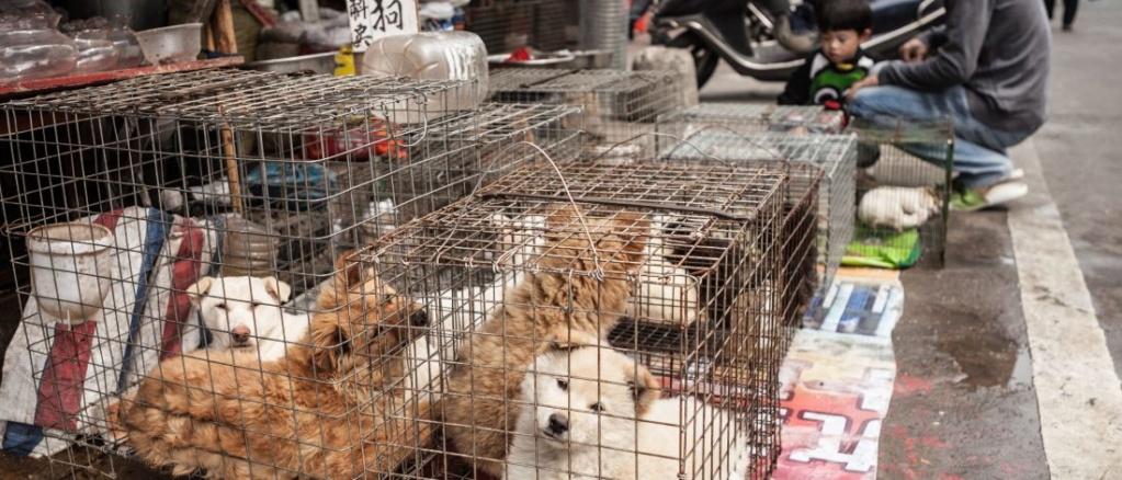 La Chine interdit (enfin) la consommation de viande de chien et chat… et d'animaux sauvages! Viande12