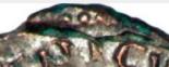 Fautée de TETRICUS peu banale : incus et normal collés ! Captu176
