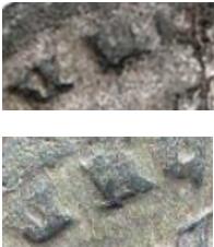 Ma collection de romaines - Page 14 Correc10
