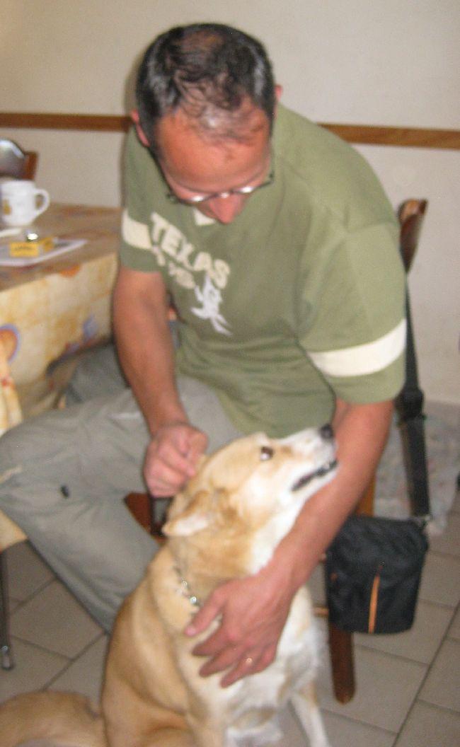 RENATA croisée husky 5 ans (79 ) adoptée Img_3617