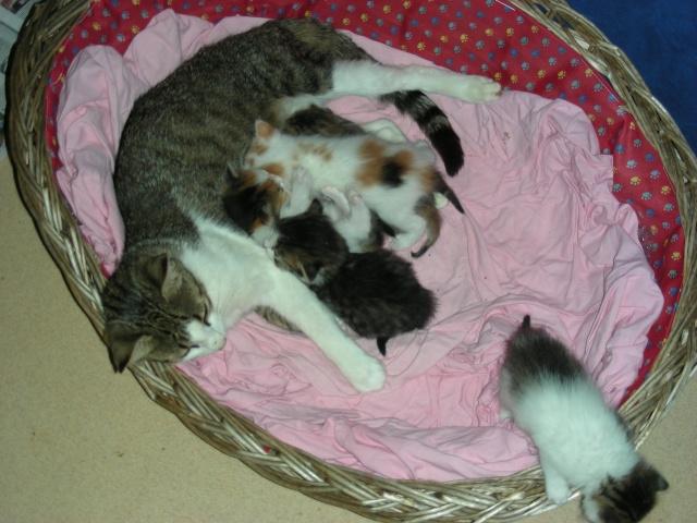 Une famille pour maman chat et ses 5 petits  Dscn2010