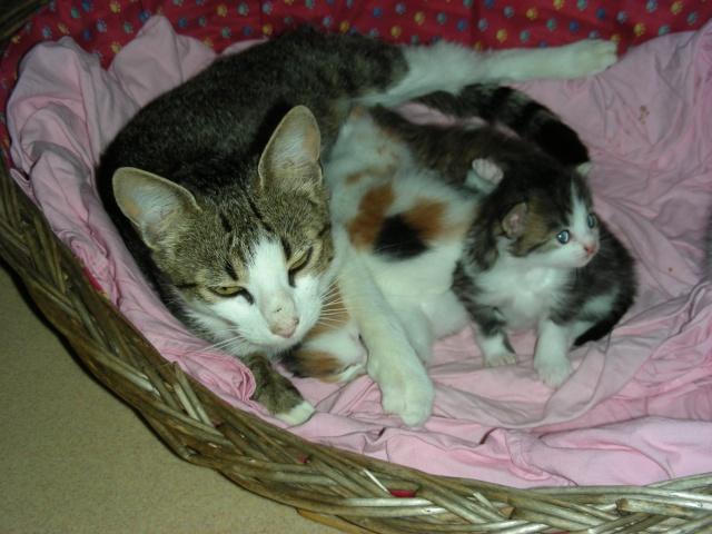 Une famille pour maman chat et ses 5 petits  Dscn2011