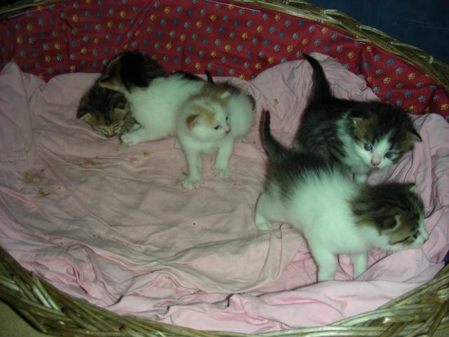 Une famille pour maman chat et ses 5 petits  Dscn2111