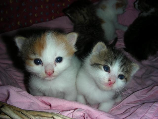 Une famille pour maman chat et ses 5 petits  Dscn2112