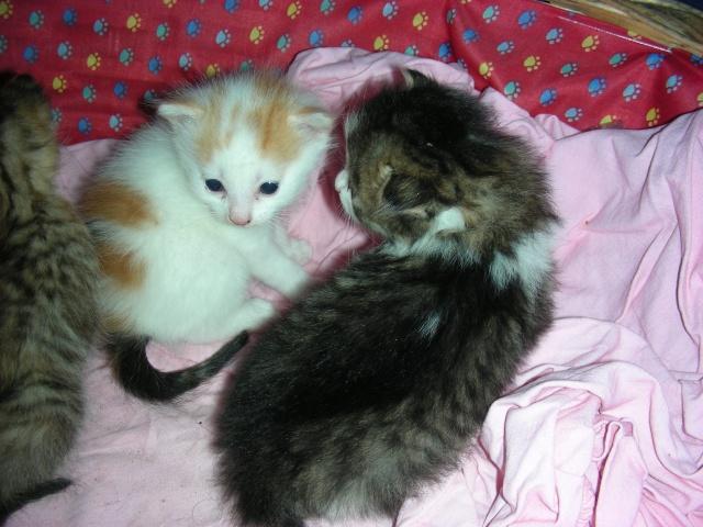 Une famille pour maman chat et ses 5 petits  Dscn2113