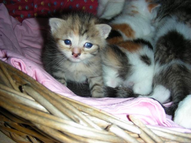 Une famille pour maman chat et ses 5 petits  Dscn2115
