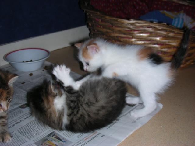 Une famille pour maman chat et ses 5 petits  Dscn2119