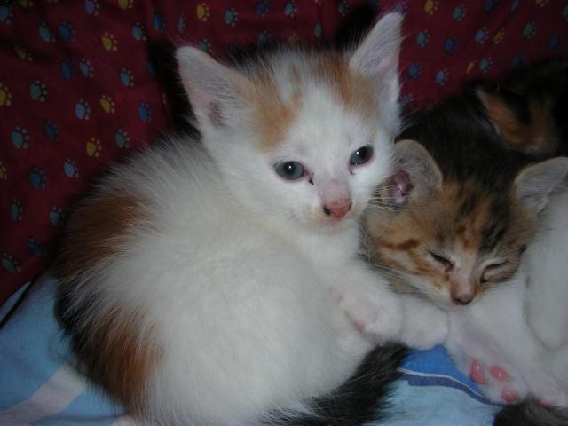 Une famille pour maman chat et ses 5 petits  Dscn2121