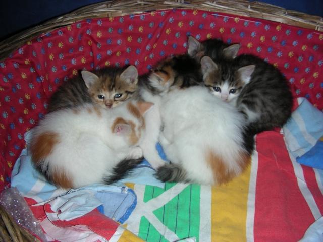 Une famille pour maman chat et ses 5 petits  Dscn2123