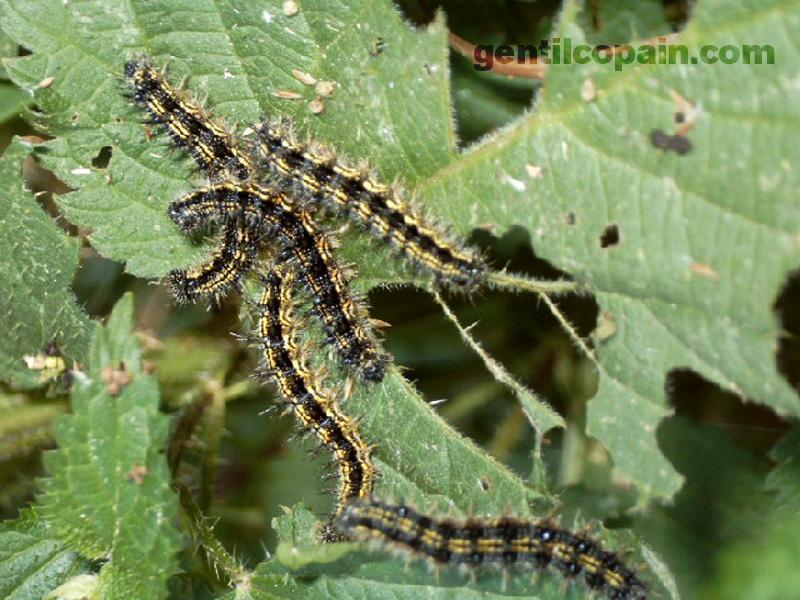 Insectopia Chenil11