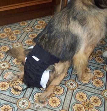 TCHARA a une culotte (4 septembre 2008) Couche10