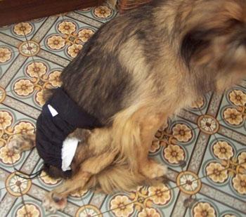 TCHARA a une culotte (4 septembre 2008) Couche11